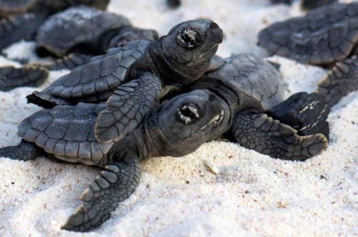 Bringing Baby Turtles to Sea