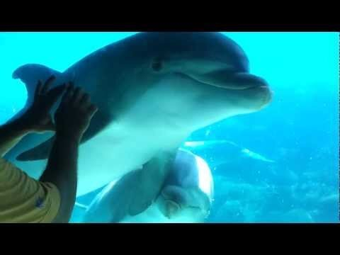 How to use a comb to get a dolphin to come right up to you at the zoo