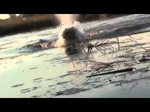 Hippo swims after a passing boat with surprising speed