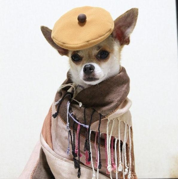 The Best Dressed Dog