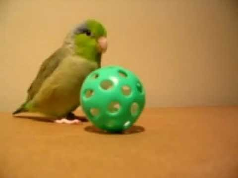 Overly Excited Bird Video Is the Greatest Thing Ever