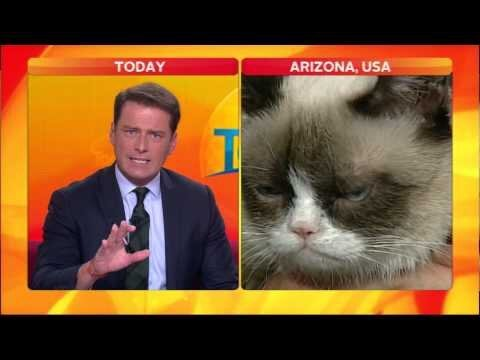 Reporter Can't Handle Grumpy Cat