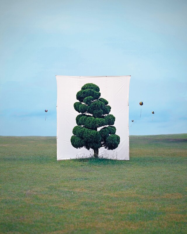 Trees Are Framed by Giant Canvas Backdrops in Photo Series