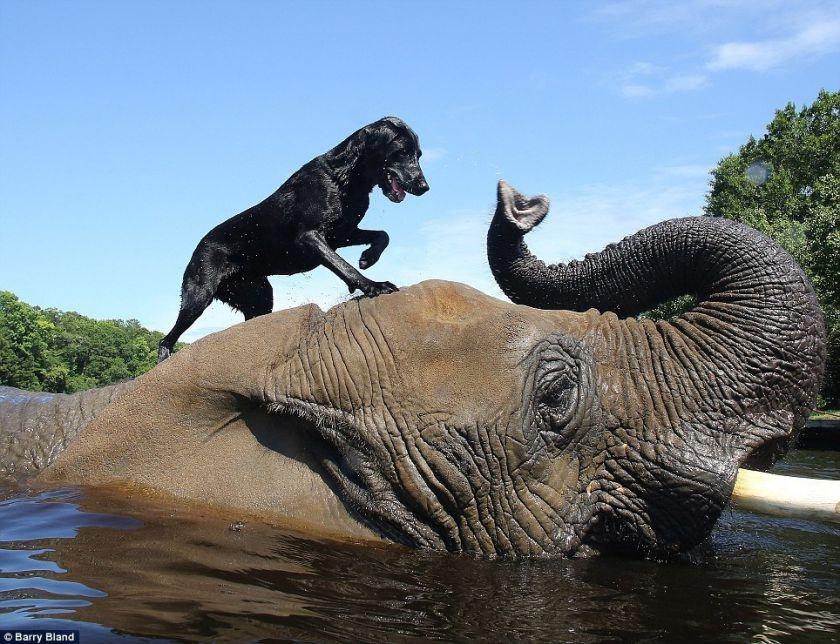 Amazing Animal Companionships