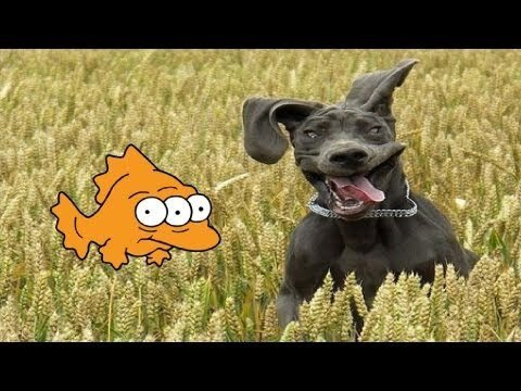 Dog caught a fish
