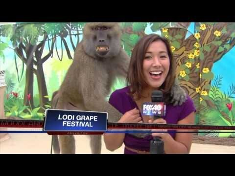 Baboon Gropes Female Reporter on Live TV, Smiles Like a Creep