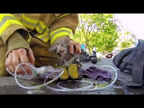 GoPro Video of Fireman Rescuing Kitten WILL Make You Cry