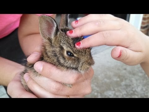 Adorable Bunny Video Has Ending You Won't See Coming
