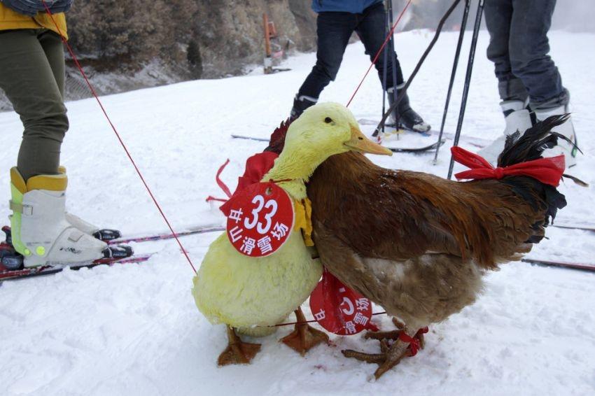Bizzarre ski competition