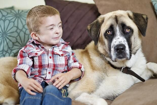 An ill boy and his dog