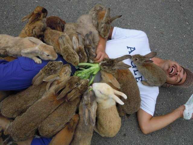 Rabbit island in Japan