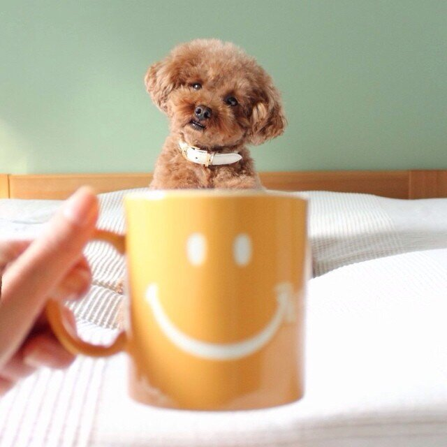 "Dogs of All Sizes Look Like They're Sitting in Mugs. Collective ""Aww"""