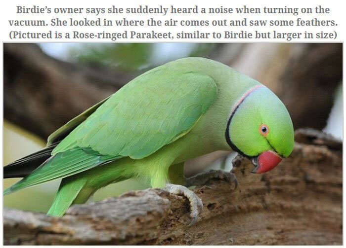 A Parakeet Survived After Being Sucked Into a Vacuum Read more at http