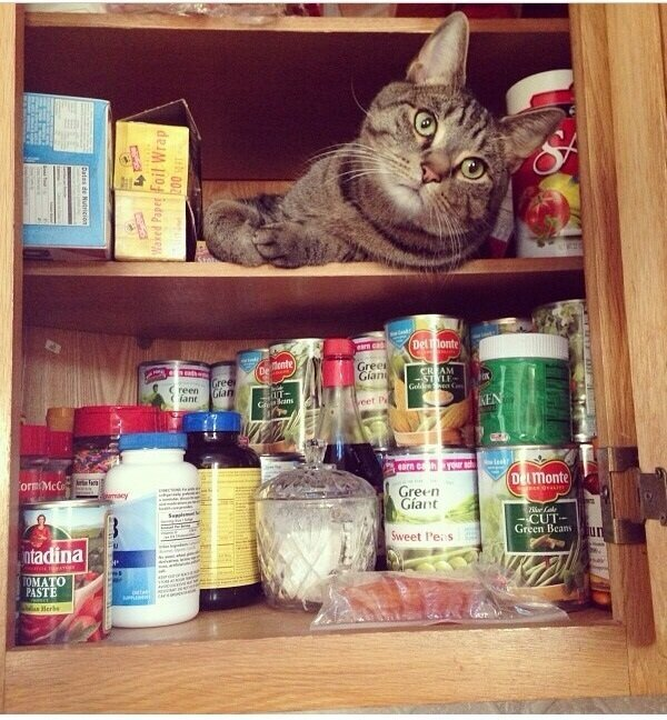 These 25 Cats Went Out Of Their Way To Be Absolute Jerks