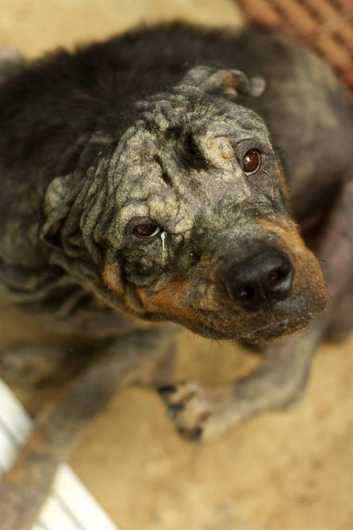 Rescuers Couldn't Even Tell This Dog's Breed...
