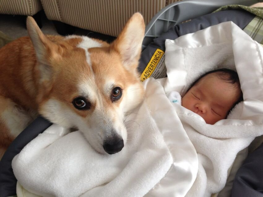Meet Wilbur (the Corgi) and Claire (the baby).