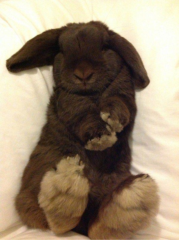 Bunnies Snoozin'