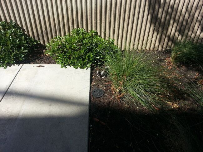 A Guy Spotted This Outside Of His Office Building. Read more at http:/