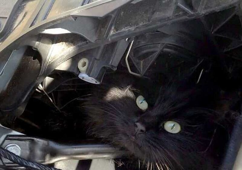 Lucky black cat survives TWO WEEKS trapped in owner's car engine