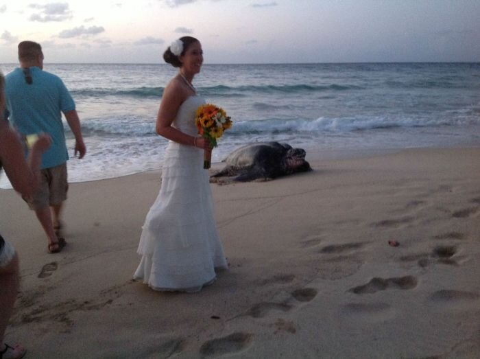This Turtle Is A Total Wedding Crasher