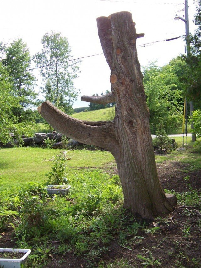 This Guy Found A Normal Tree Stump In His Yard And Made...
