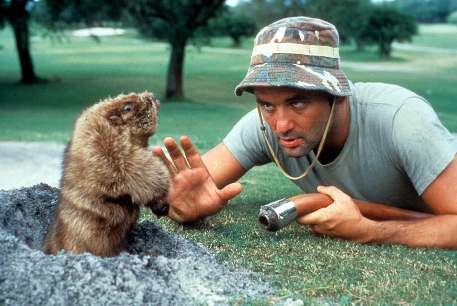 What your favorite Bill Murray movie says about you