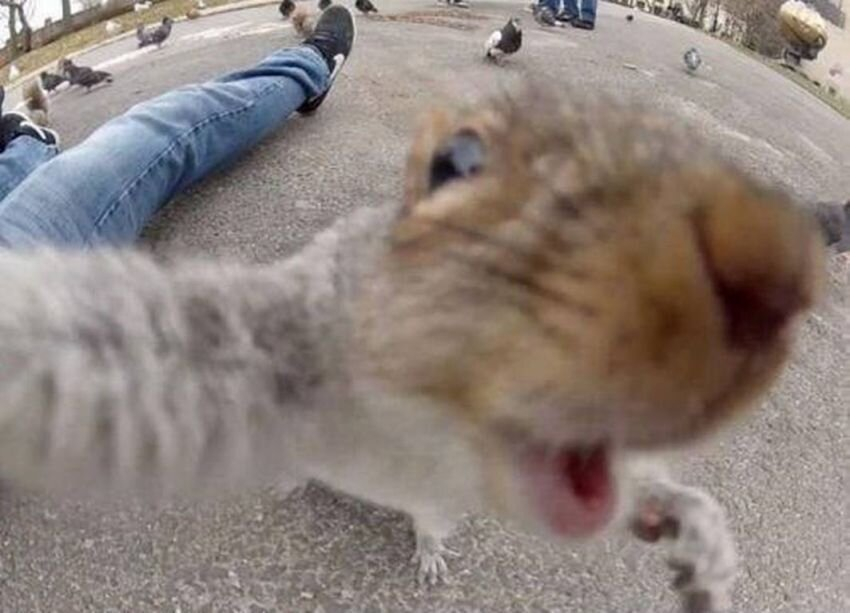 Take Your Selfies And Shove 'Em. Because These Animals Nailed It