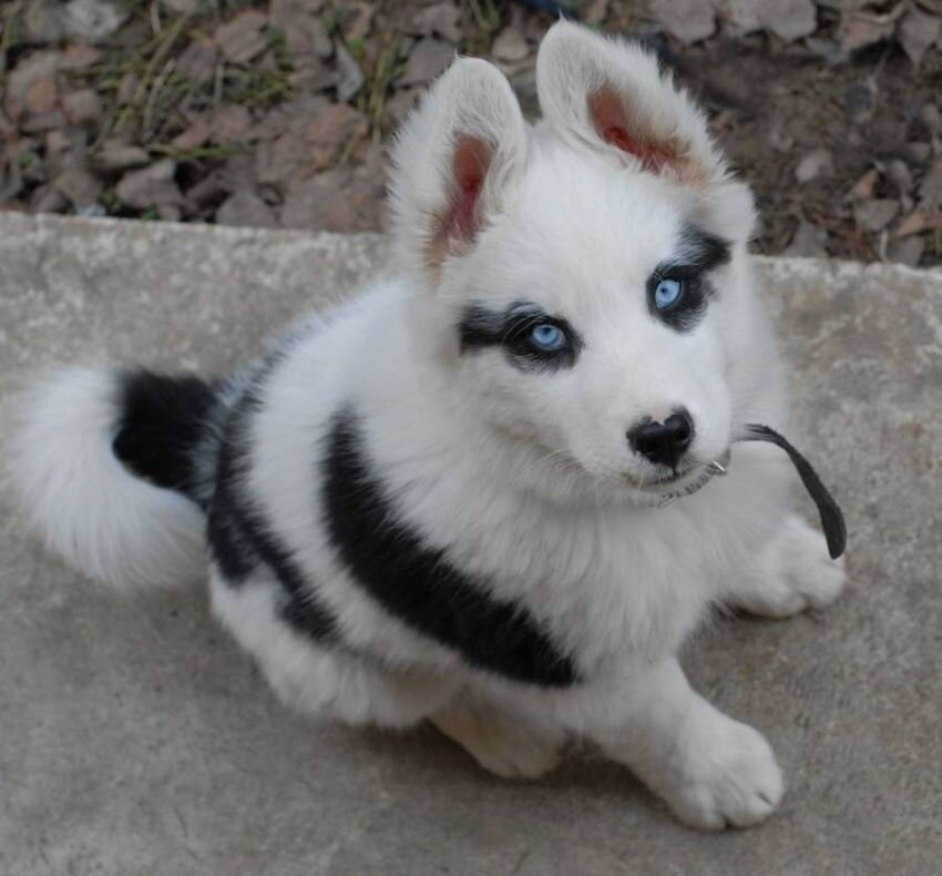 Dogs With Extraordinary Fur Patterns And Markings