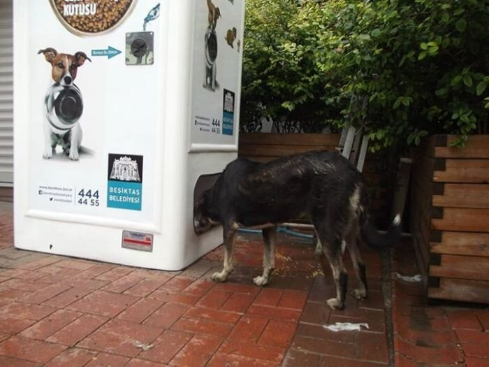 Amazing Machine Feeds Homeless Animals