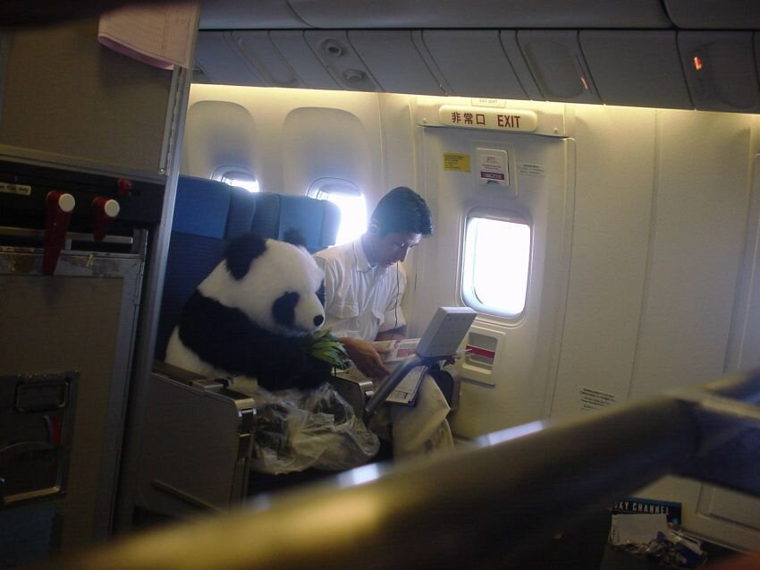 The bizarre passengers you see on planes today