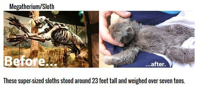 Cute Animals That Were Once Gigantic