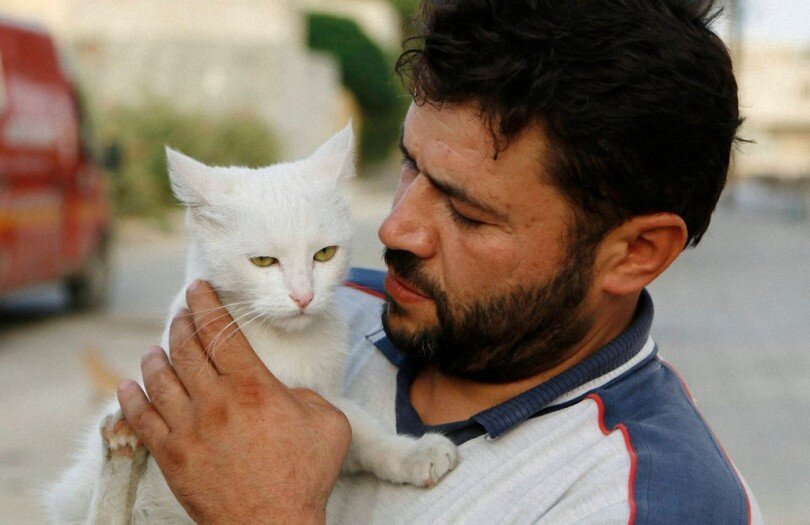 This Man's Daily Act Of Kindness To Cats In Syria Is Truly Incredible
