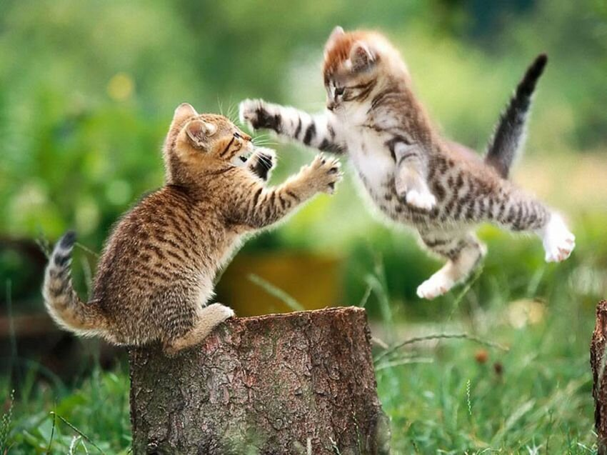 The 16 Greatest Battles Fought By The Most Courageous Cats Of Our Time