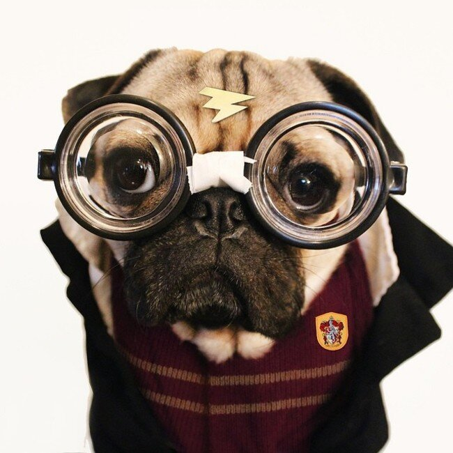 Doug the Pug Does Halloween Better than You