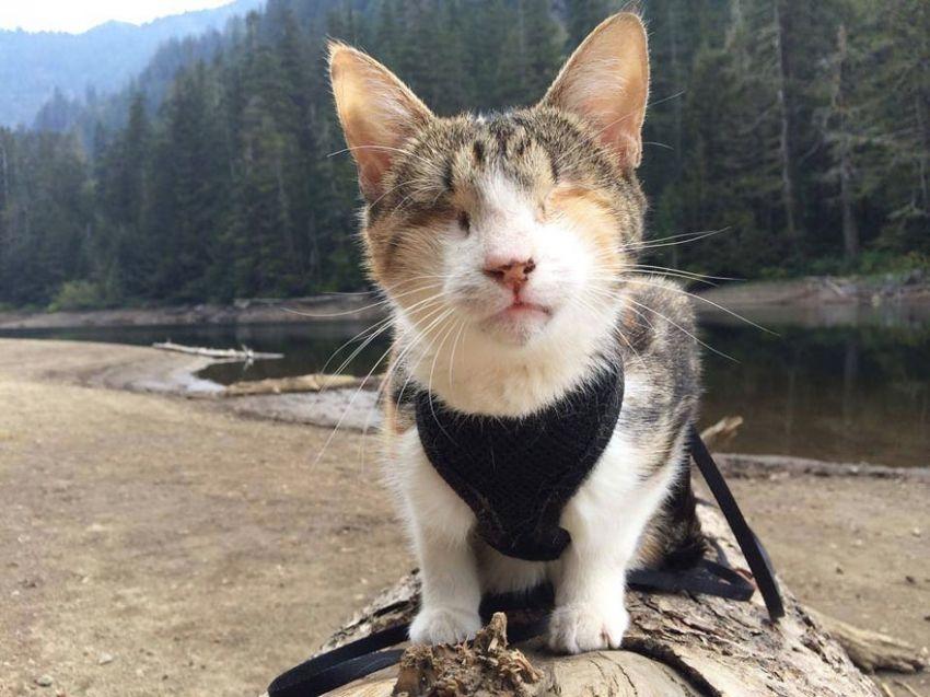 Meet Honey Bee, Who Loves Hiking