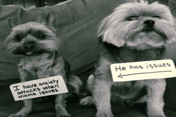 Hilarious Pets Facing Public Shaming That Will Make You Say AwWw! от Katarina за 18 nov 2014