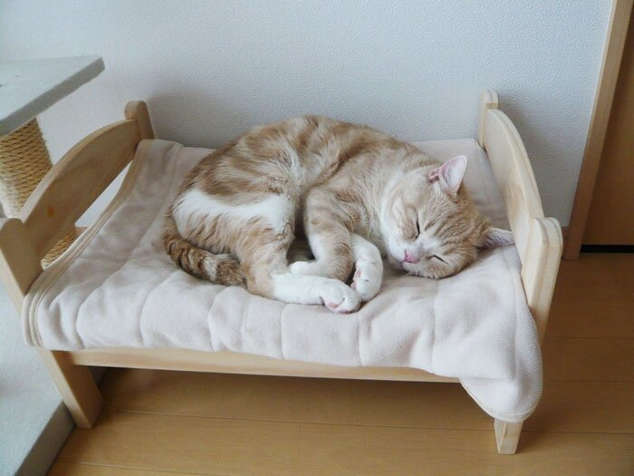 Japanese Cat Owners Turn Doll Beds Into Adorable Cat Beds
