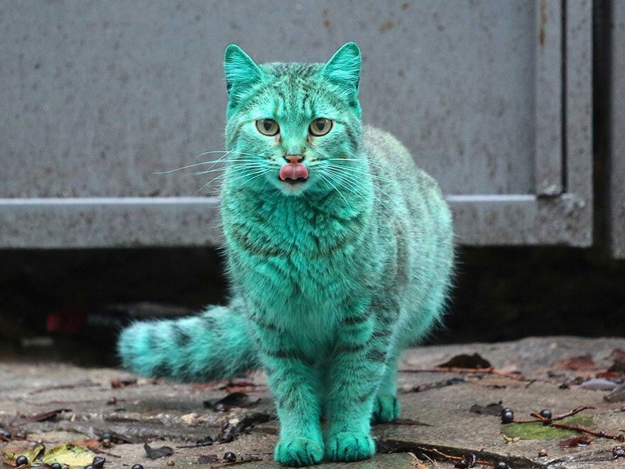 This Stray Cat Accidentally Turned Itself Green