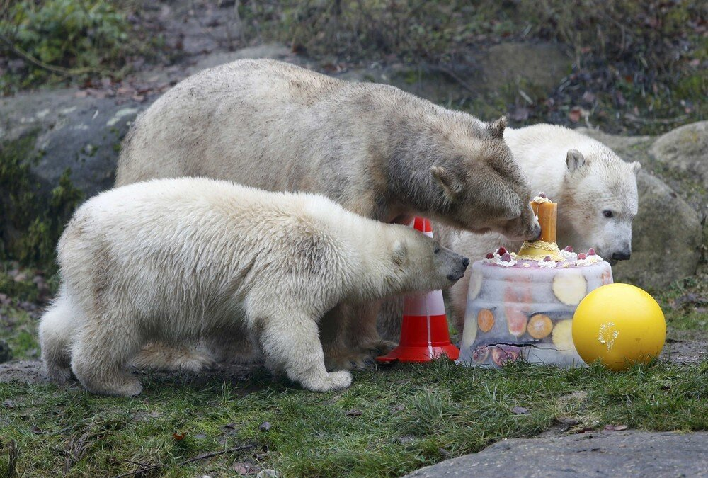 Polar Bear Twins Celebrate 1st Birthday in Hellabrunn