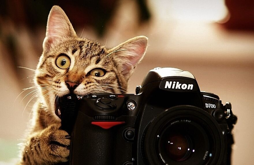 Share Pictures Of Animals Getting Comfortable With Camera Gear от Katarina за 16 jan 2015