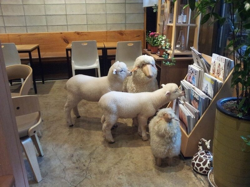 You Can Play With Sheep As You Sip Your Coffee At This Café