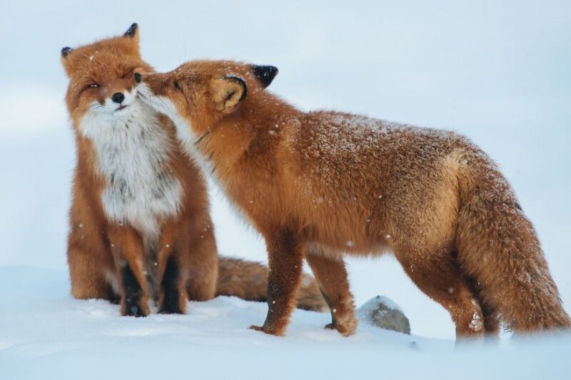 50 Animal Couples That Prove Love Exists In The Animal Kingdom Too