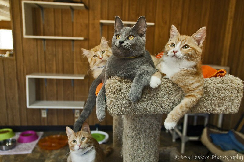 Rescue Cats At The Largest No-Kill Cat Sanctuary In California
