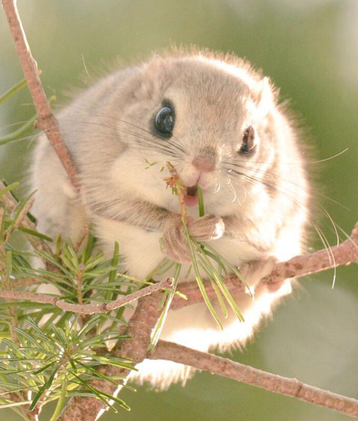 Hokkaido Island In Japan Is Home To 7 Incredibly Cute Animals