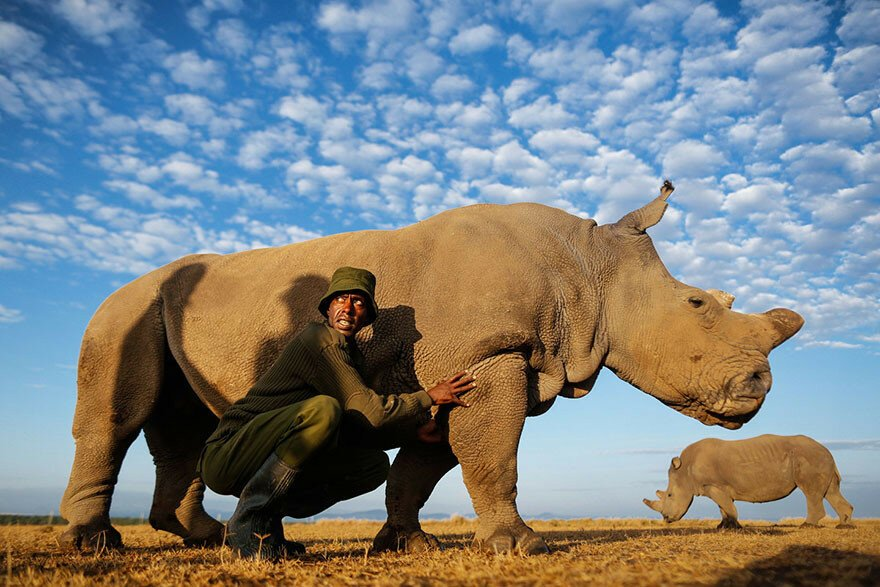 Rangers Protect The Last Remaining Male Northern White Rhino