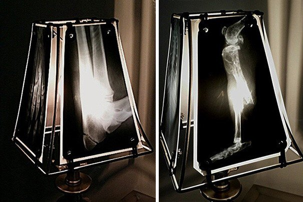 Pet Oncologist Creates Lamps With Animal X-Rays