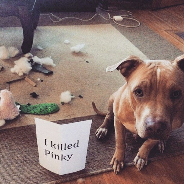 These Dogs Were Caught Red-Handed…But You'll Love Them Anyway