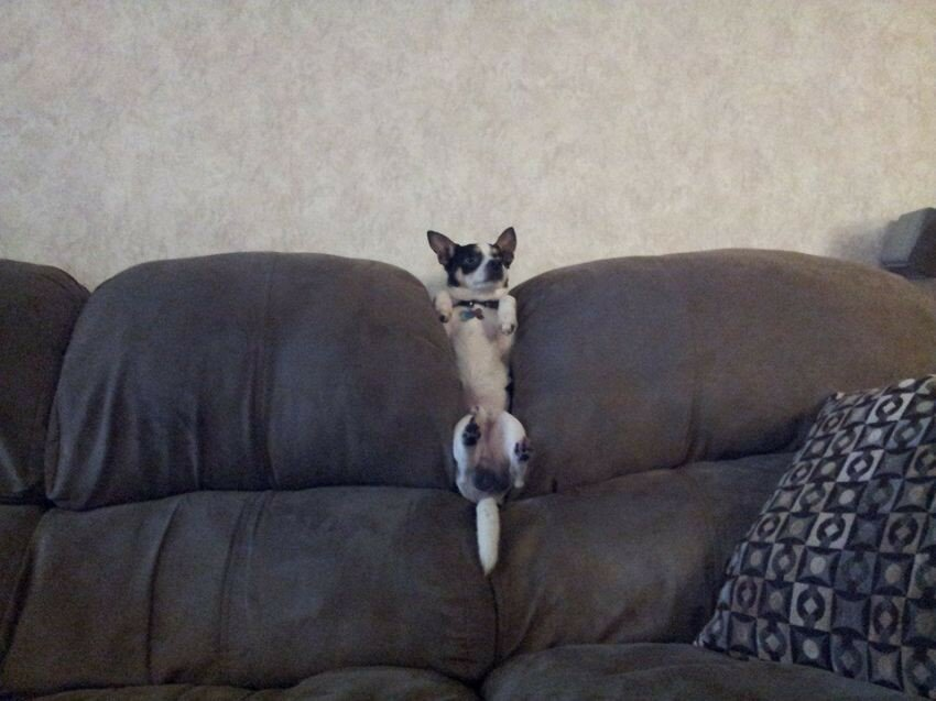 21 Dogs Redefining The Meaning Of Couch Potato