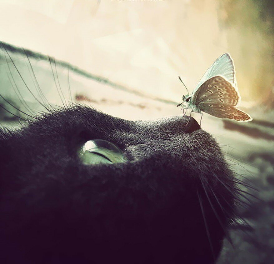 20 Animals With Butterflies Look Like Disney In Real Life