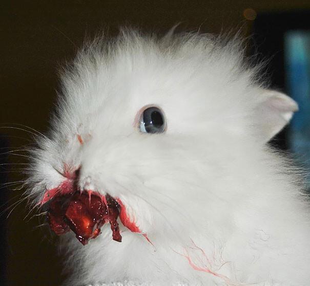 20 Animals Eating Berries Look Like Horror Movie Monsters